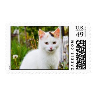 Franqueo blanco del gatito
