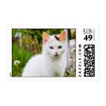 Franqueo blanco del gatito sellos