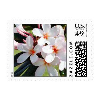 Franqueo blanco del Hawaiian del Plumeria Timbres Postales