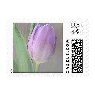 Franqueo bonito del tulipán de la lavanda sello