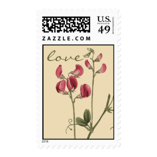 Franqueo botánico del amor de la flor del guisante