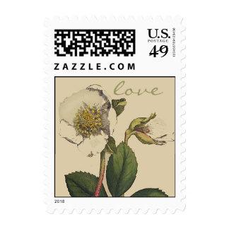 Franqueo botánico del amor de la flor del rosa de