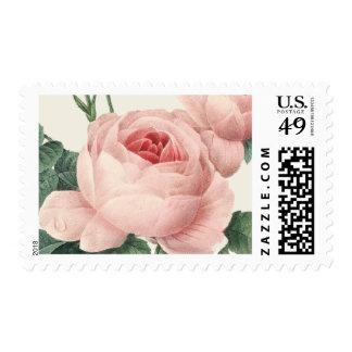 Franqueo botánico del encanto el   sellos