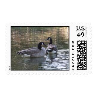 Franqueo canadiense de los gansos timbre postal