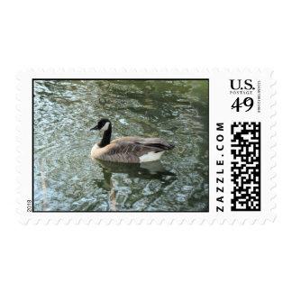 Franqueo canadiense del ganso timbre postal