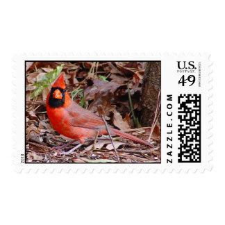 Franqueo cardinal septentrional