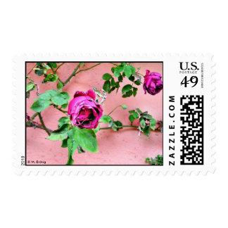 Franqueo color de rosa irlandés salvaje sellos