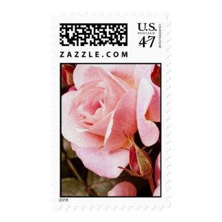 Franqueo color de rosa rosado timbre postal