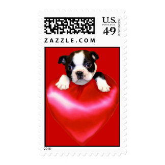 Franqueo de Boston Terrier del amor