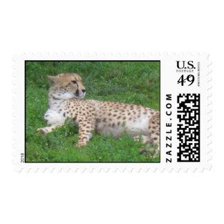 Franqueo de descanso del guepardo (personalizable)