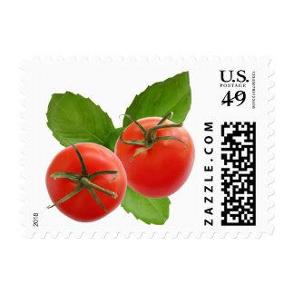 Franqueo de la albahaca del tomate