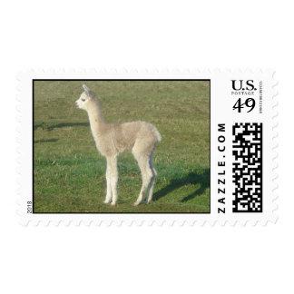 Franqueo de la alpaca sellos