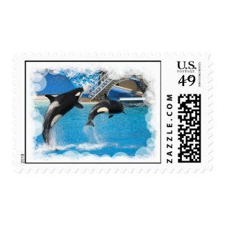 Franqueo de la ballena de la orca