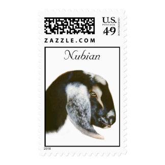 Franqueo de la cabra de Nubian