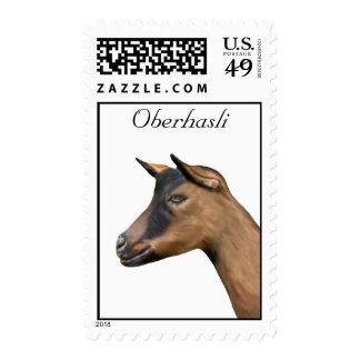 Franqueo de la cabra de Oberhasli