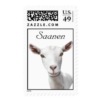 Franqueo de la cabra de Saanen