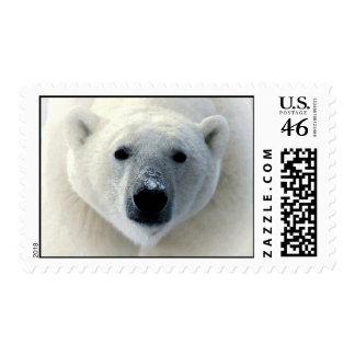 Franqueo de la cara del oso polar