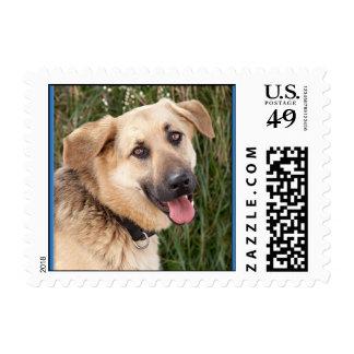"""Franqueo - de """"la cara su perro del rescate """" sello postal"""