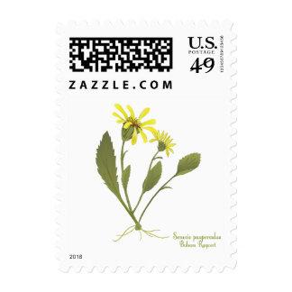 Franqueo de la flor de la pradera del Ragwort del