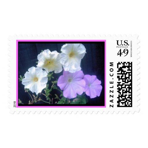 Franqueo de la flor de las petunias sellos