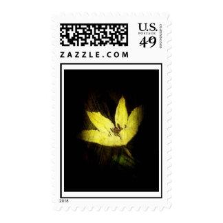 Franqueo de la flor del Clematis del Grunge