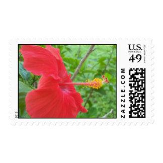Franqueo de la flor del hibisco