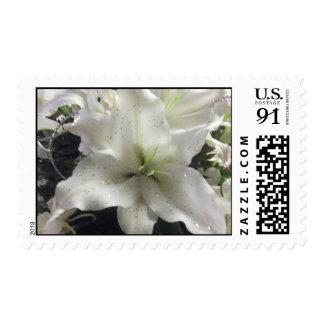 franqueo de la flor del lirio