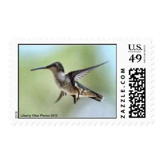 Franqueo de la foto del colibrí sellos