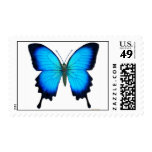 Franqueo de la mariposa de Papilio Ulises