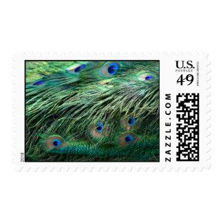Franqueo de la pluma del pavo real timbre postal