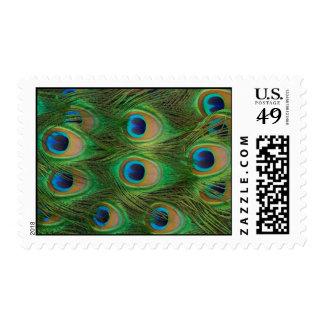 Franqueo de la pluma del Peafowl/del pavo real Timbres Postales