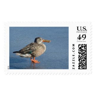 Franqueo de la primera clase de la gallina del timbres postales
