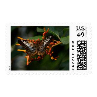 Franqueo de la primera clase de la mariposa de las sello