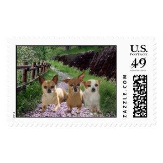 Franqueo de la púrpura de la chihuahua timbres postales