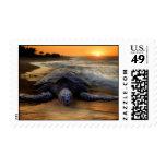Franqueo de la tortuga de mar