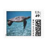 Franqueo de la tortuga de mar verde