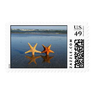 Franqueo de las estrellas de mar