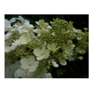 Franqueo de las flores blancas el | tarjeta postal