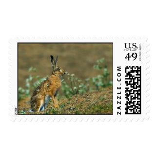 Franqueo de las liebres timbres postales