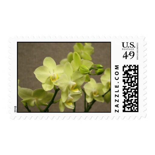 Franqueo de las orquídeas sellos postales