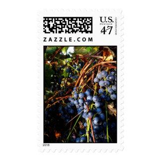 Franqueo de las vides de uva sello postal