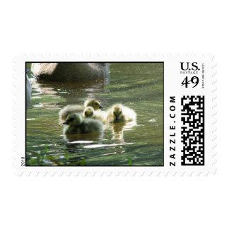 Franqueo de los ansarones timbres postales