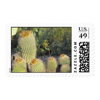 Franqueo de los cactus de barril