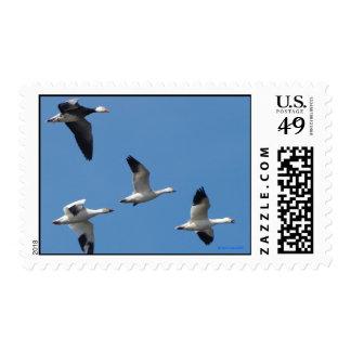 Franqueo de los gansos de nieve timbres postales