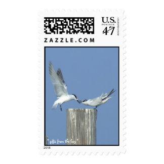 Franqueo de los pares de la gaviota sello postal