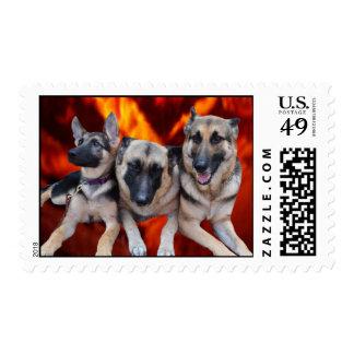 Franqueo de los pastores alemanes del trío sellos postales