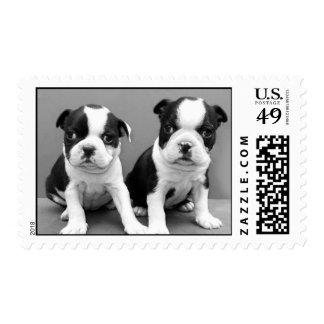 Franqueo de los perritos de Boston Terrier Timbres Postales
