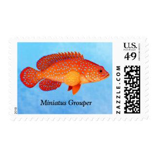 Franqueo de los pescados del mero de Miniatus