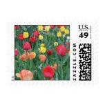 Franqueo de los tulipanes