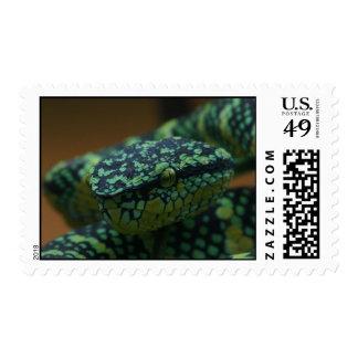 Franqueo de ojos verdes de la serpiente